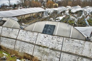 Part of Abernethy and Spencer greenhouses in Lincoln lay in ruins from the weight of 40 inches of snow from the recent blizzard. The 40-year-old greenhouses full of spring plants collapsed and have been declared a total loss. The historic 110-year-old classic glass greenhouses survived the record-breaking storm. (Photo by Douglas Graham/Loudoun Now)