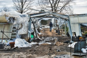 Part of Abernethy and Spencer greenhouses in Lincoln lay in ruins from the weight of 40 inches of snow from the recent blizzard. (Photo by Douglas Graham/Loudoun Now)